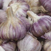 Garlic Red Duke Bulbs (hardneck)