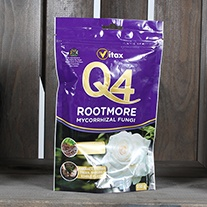 Q4 Rootmore