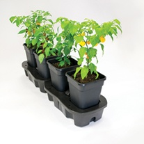 Quadgrow Pots Watering System,  4 pots