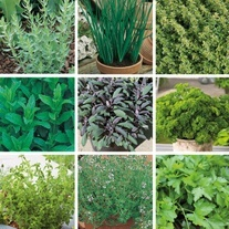 Chef's Complete Kitchen Herb Collection