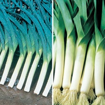 Leek Veg Plant Collection
