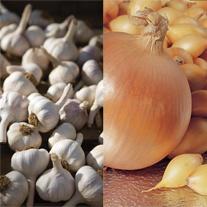 Onion Centurion & Garlic Tuscany Wight