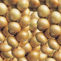 Sturon AGM Onion Sets