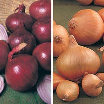 Heat Treated Onion Set Collection