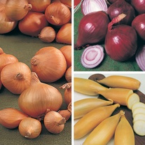 Onion Plant Collection