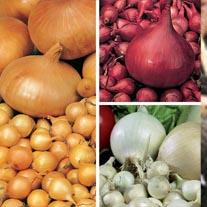 Autumn Planting Onion Set Collection