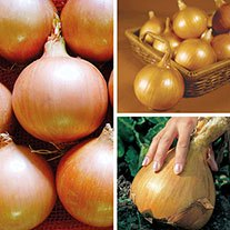 Gourmet Onion Plant Collection