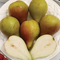 Pear Concorde Fruit Tree