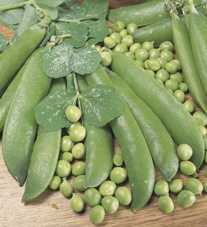 Pea Veg Plant Collection