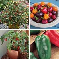 Pepper Veg Plant Collection