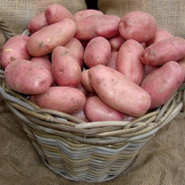 Potato Sarpo Mira (Maincrop Seed Potato)