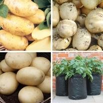 D.T.Brown Classic Potato Kit