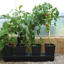 Quadgrow Pots Watering System,  4 pots