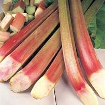 Rhubarb Timperley Early Crowns