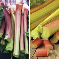 Apple Delight and Poulton's Pride Rhubarb Collection