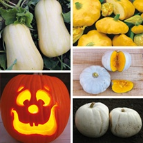 Squash and Pumpkin Plant Collection