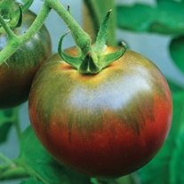 Tomato Noir de Crimee (Medium) Grafted Plants