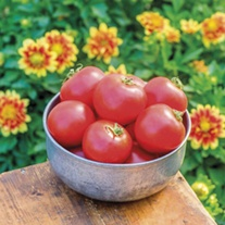Tomato Crimson Crush F1 (Large) Veg Plants