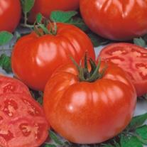Tomato Buffalo Steak F1 ( Beefsteak) Grafted veg plants