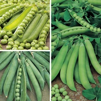Pea Veg Plant Collection