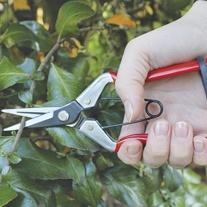 Darlac Vine Scissors