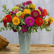 Zinnia Giant Cut Flower Mixed Flower Plants