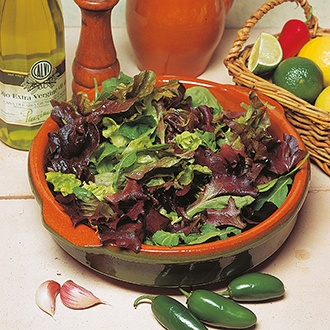 Lettuce D.T.Brown's Salad Mix Seeds