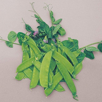 Pea (Mangetout) Carouby de Maussane Seeds