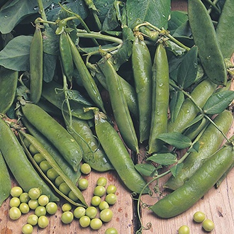 Pea (Snap Type) Sugar Ann AGM Seeds