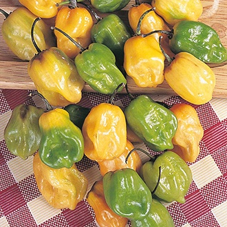 Pepper (Hot) Habanero AGM Seeds