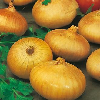Onion (Globe) Senshyu Yellow Seeds