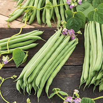 Organic Climbing French Bean Cobra AGM Seeds