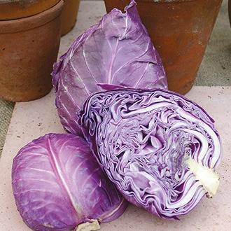 Cabbage (Red) Kalibos Seeds