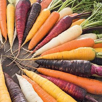 Carrot Harlequin F1 Seeds