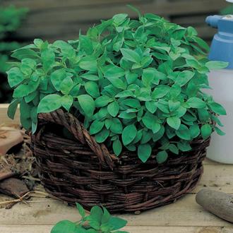 Lemon Basil Herb Seeds