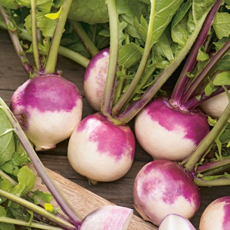 Turnip Milan Purple Top Seeds