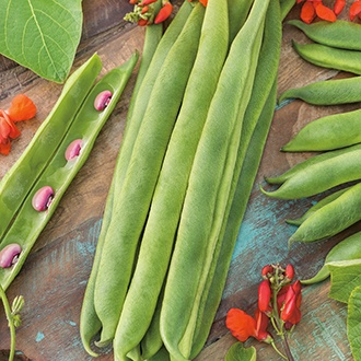 Runner Bean (Red Flowered) Enorma AGM Seeds