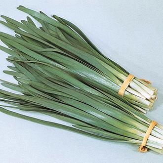 Garlic Chives Herb Seeds