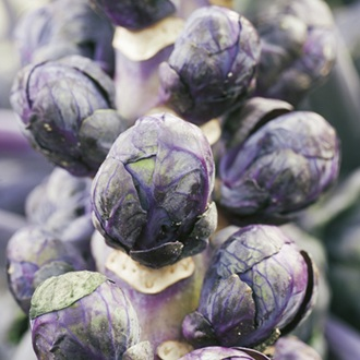 Brussels Sprout Red Rubine Seeds