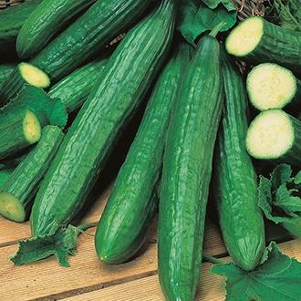 Cucumber (Indoor) Telegraph Improved Seeds