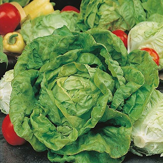 Lettuce All The Year Round Seeds