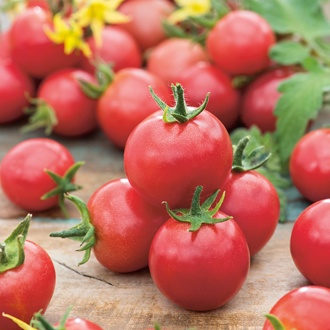 Tomato Gardeners' Delight AGM Seeds