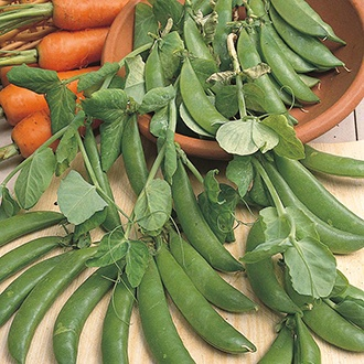 Pea (Snap type) Sugar Snap Seeds