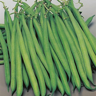 French Bean (Dwarf) Safari AGM Seeds