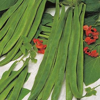 Runner Bean (Red Flowered) Galaxy Seeds