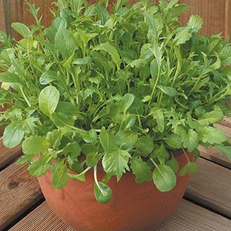 Salad Leaves Oriental Salad Leaf Mixed Seeds
