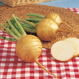 Turnip Golden Ball Seeds