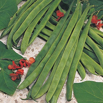 Runner Bean (Red Flowered) Armstrong Seeds