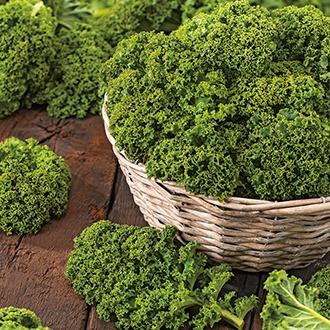 Kale Starbor F1 Seeds