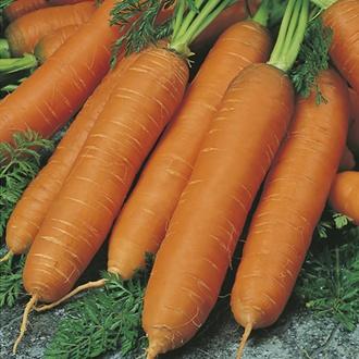 Organic Carrot Flyaway F1 AGM Seeds